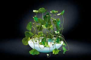 Round Bowl Lotus, Vase en résine laquée blanche